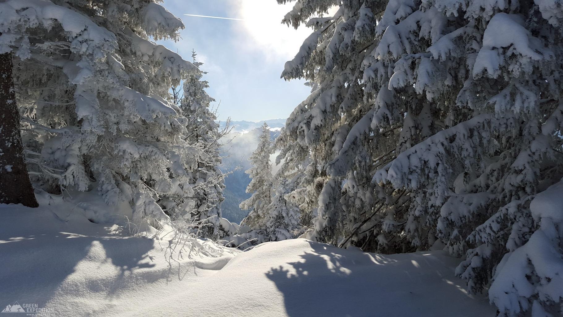 Активный отдых - зимний лес